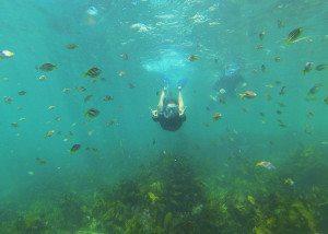 snorkeling, eco tours