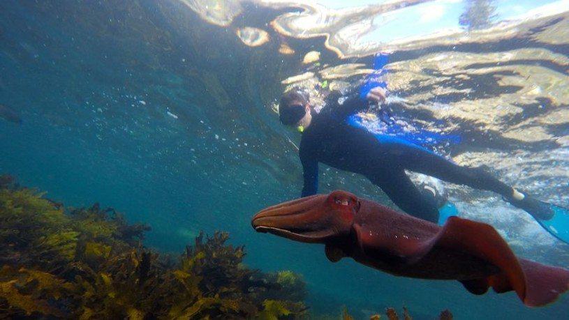 Sydney Snorkeling Tours