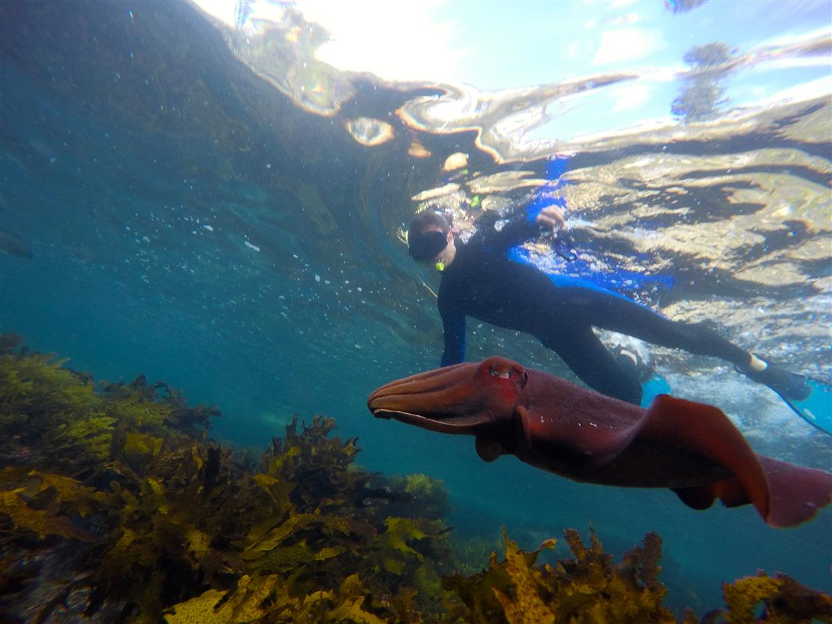 Sydney Snorkeling Tours - EcoTreasures