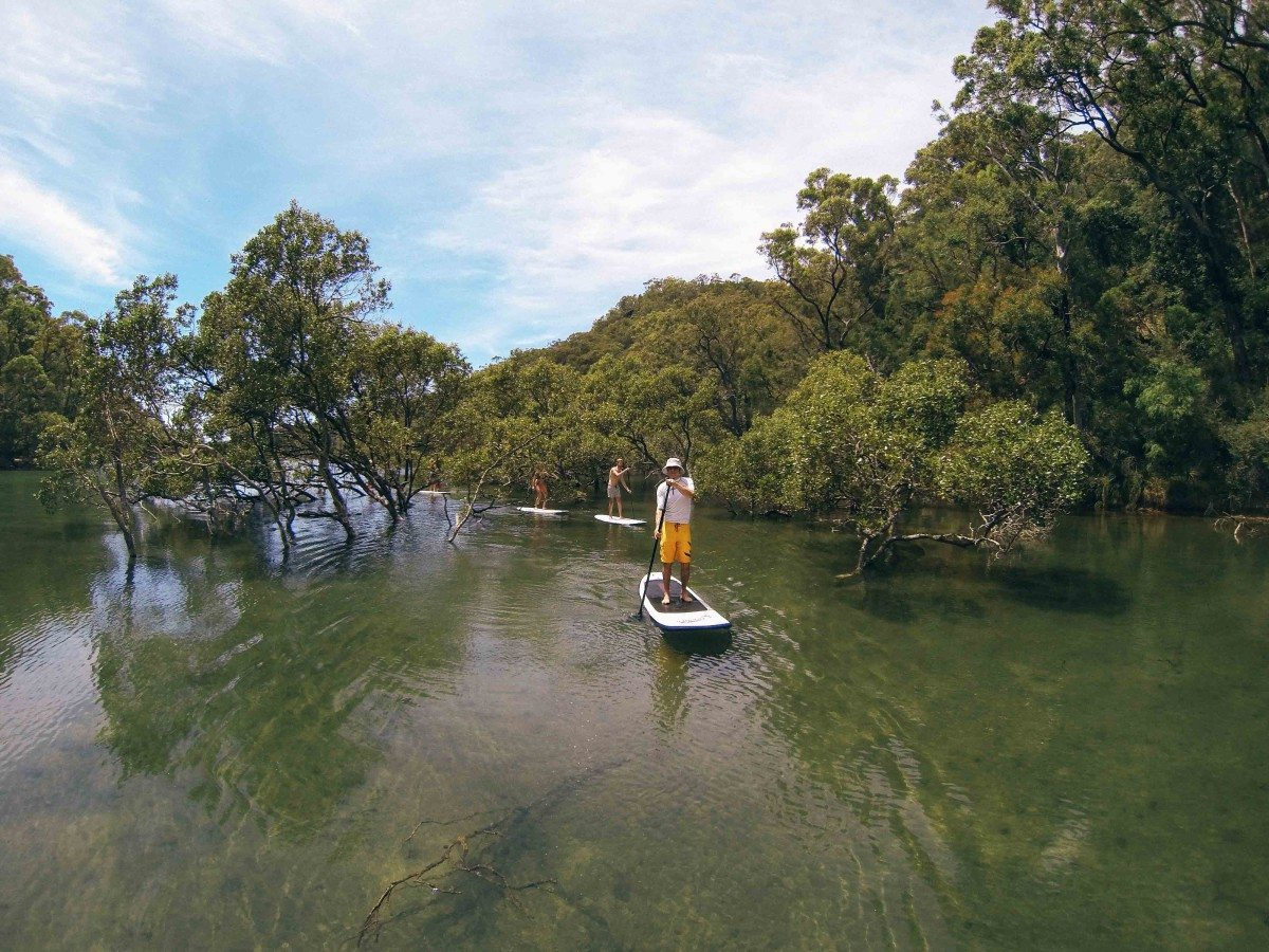 Sydney Paddle Boarding (SUP) Tours
