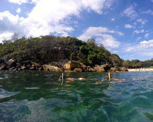 Sydney snorkel tour ecotreasures