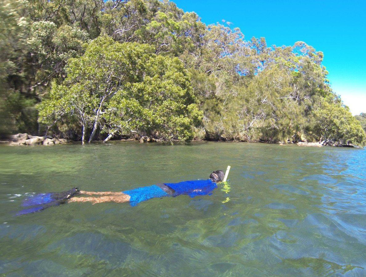 Sydney Snorkeling for sea horses tour