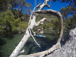 Stand up paddle boarding sydney