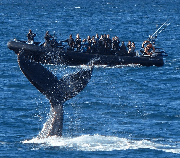 EcoTreasures Sydney Whale Watching