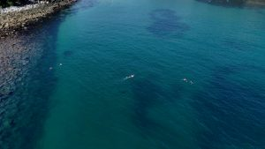 Snorkel tour manly cabbage tree bay aquatic reserve