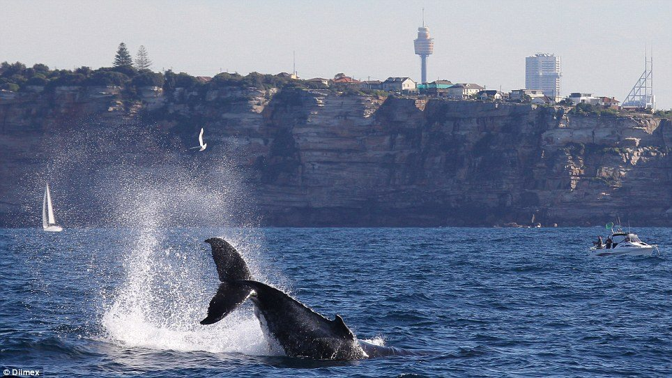 EcoTreasures Sydney Whale Watching cruise