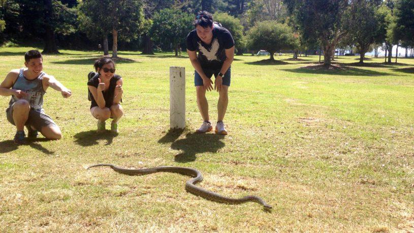 Wildlife of Sydney