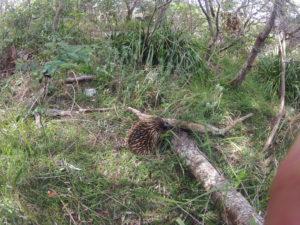Wildlife of Sydney ecotreasures
