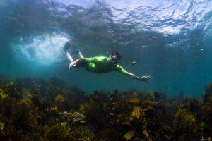 Tony Hawk snorkel tour with ecotreasures