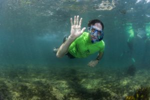 snorkel in beautiful manly with ecotreasures