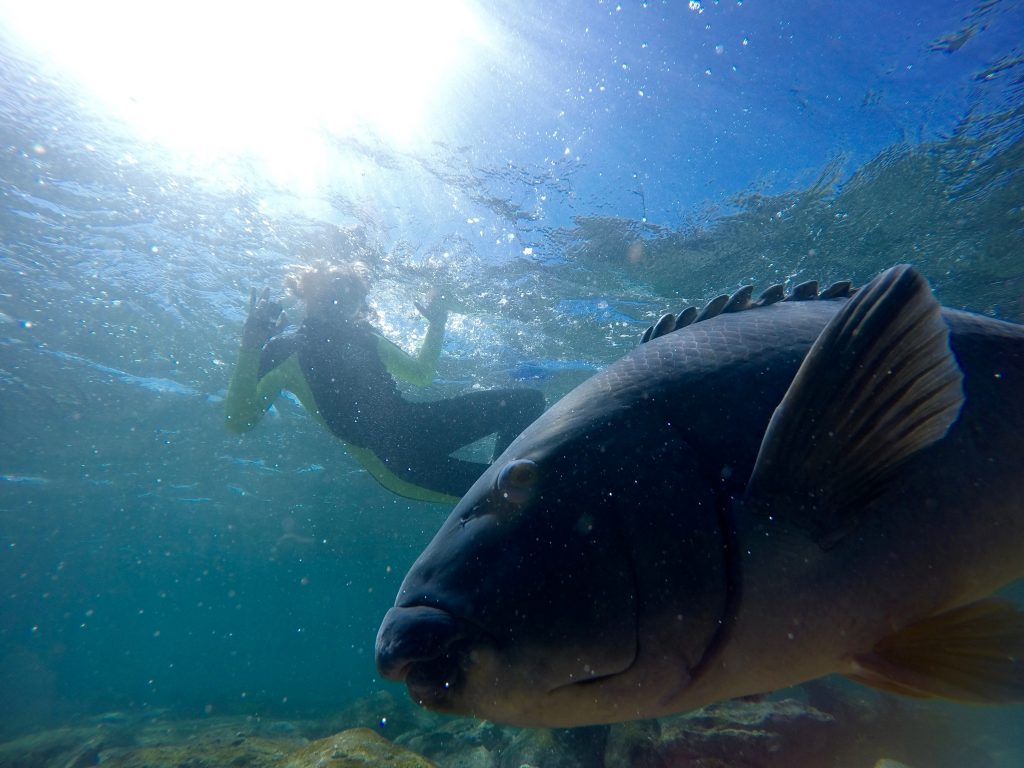snorkel in beautiful manly
